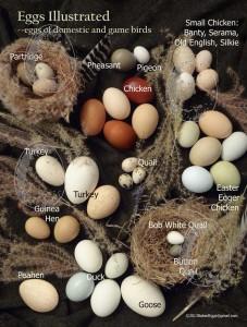 Foto: Naked Eggs