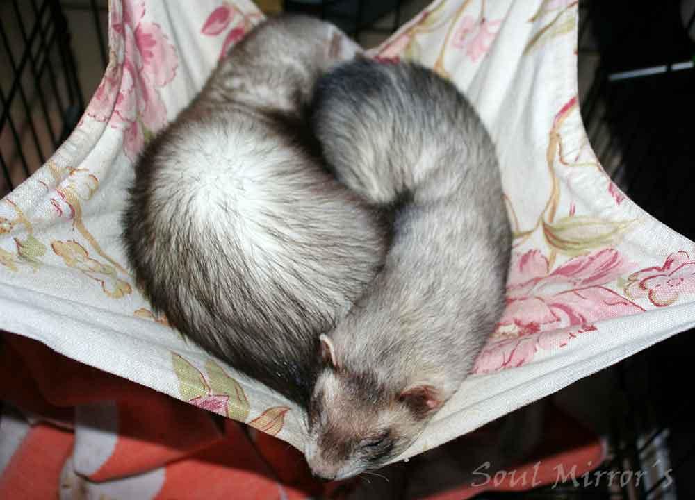 Käpiku ja Smuksi esimene üheskoos magamine kiiges.