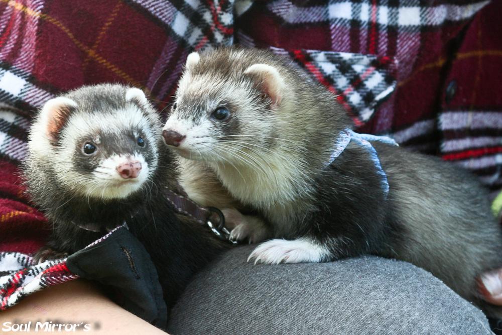 Freya ja Hanna