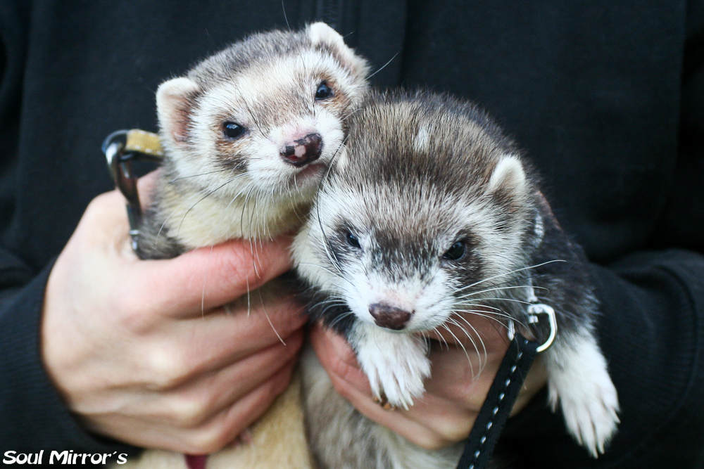 Käpik ja Freya (ema ja tütar)
